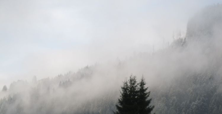 Ja, das helle Zeugs auf den Baumwipfeln ist frischer Schnee