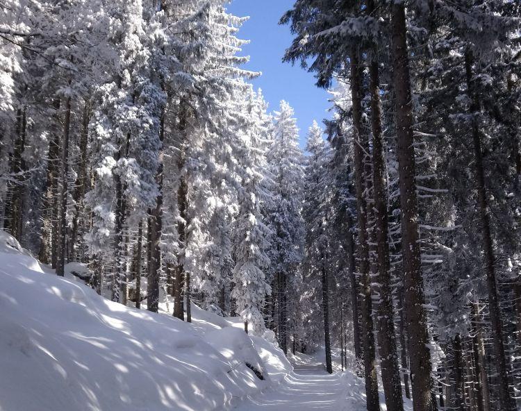 Wanderweg1